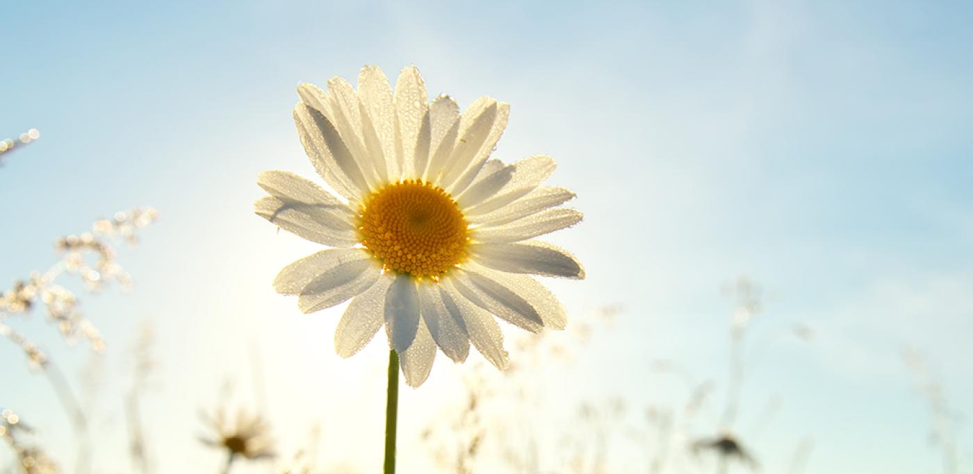Sommer_blomst_1024x500